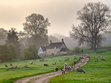 A misty Cotswold spring morning, Saintbury near Chipping Campden, Gloucestershire, England.